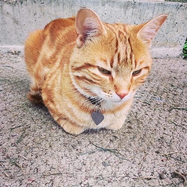 Catloaf (14)
