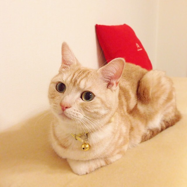 Catloaf (17)