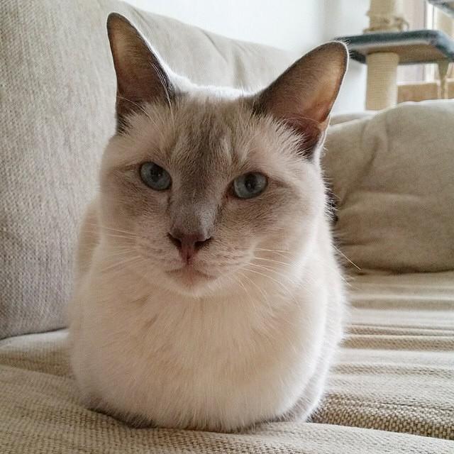 Catloaf (19)
