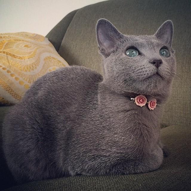 Catloaf (20)