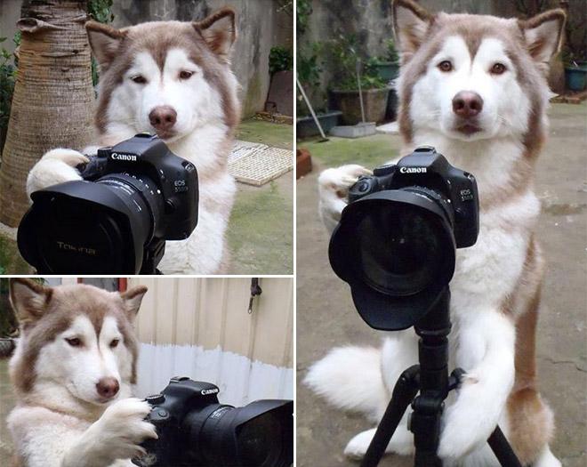 Dog On Camera