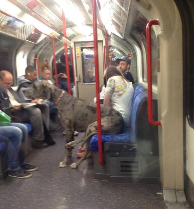 Dog On Subway