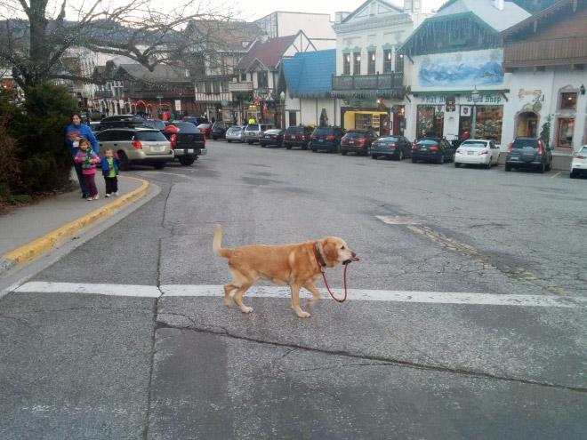 Dog Walks Itself On Leash