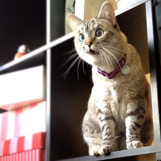 Shocked Cat (2)