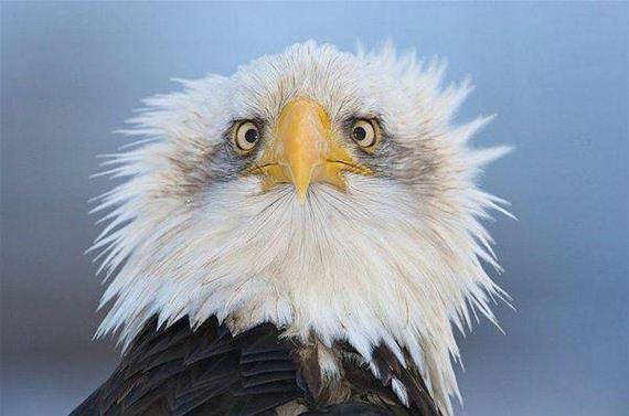 Shocked Eagle