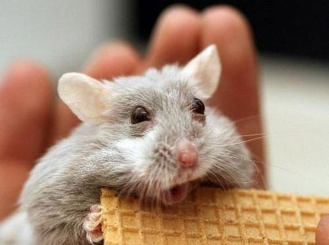 Shocked Mouse