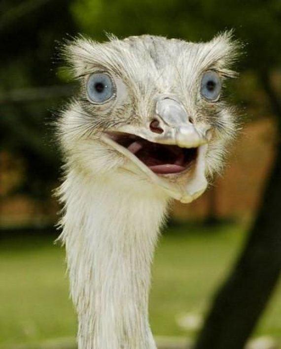 Shocked Ostrich