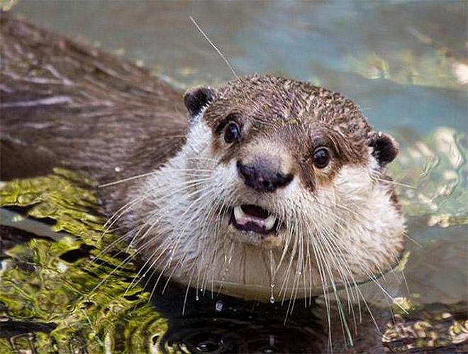 Shocked Otter