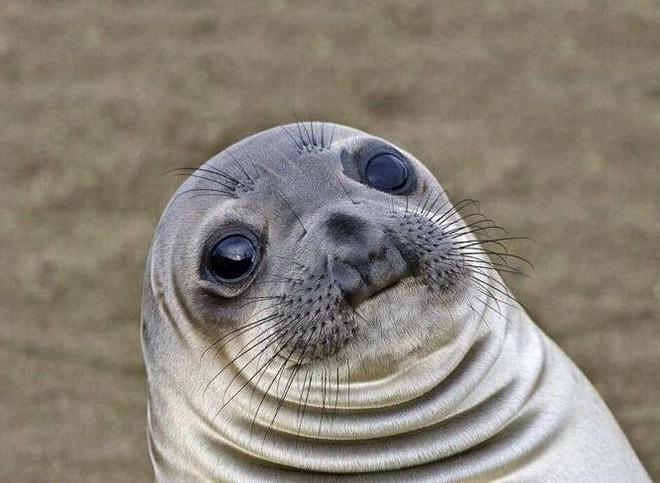 Shocked Seal
