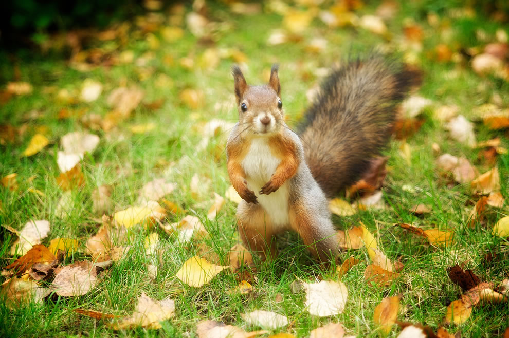 Squirrels Forget Where They Bury Nuts
