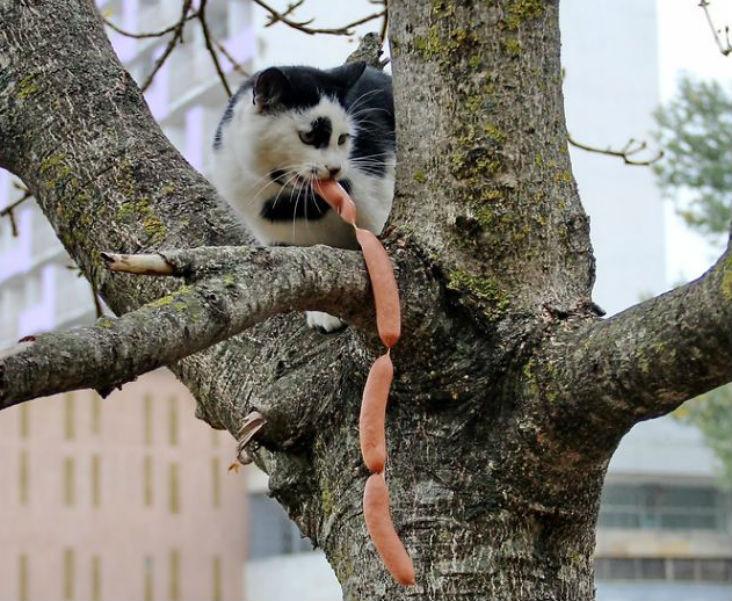 Cat Burglar (2)