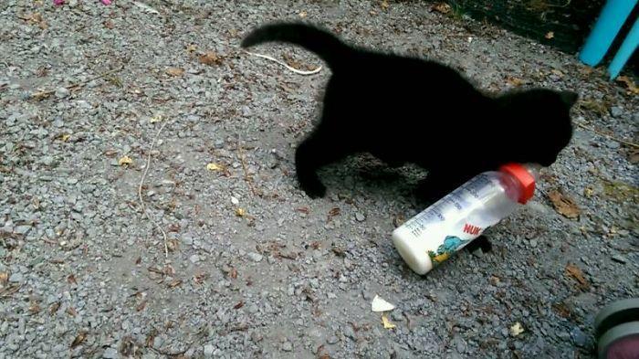 Cat Burglar (21)