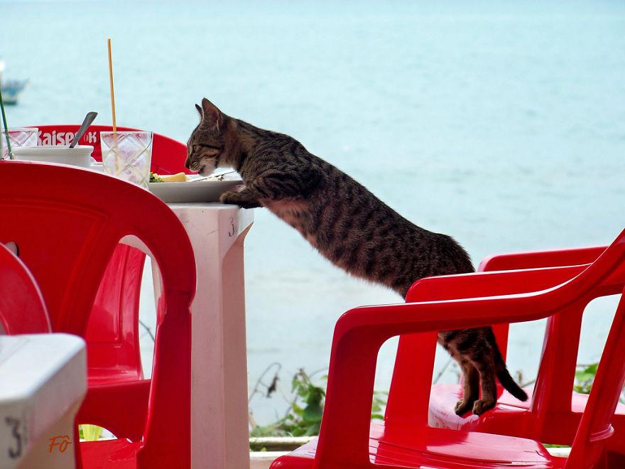Cat Burglar (25)