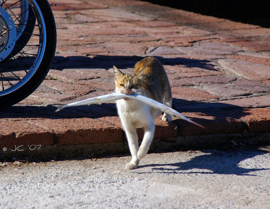 Cat Burglar (3)