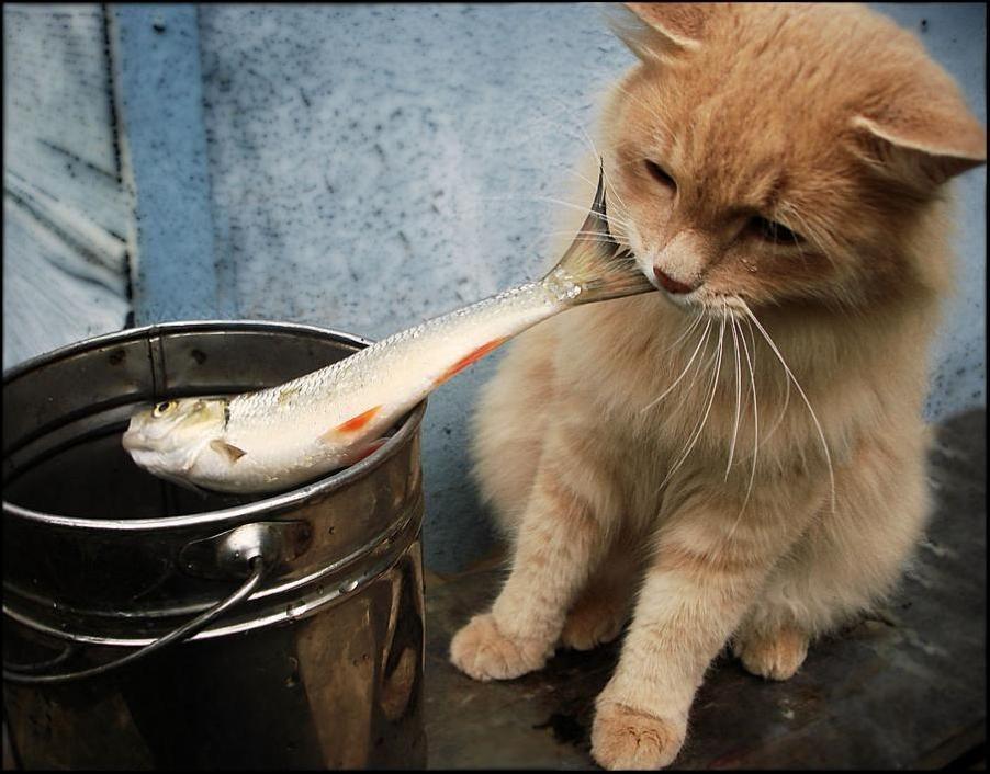 Cat Burglar (31)
