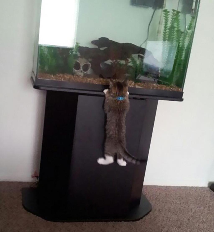 Cat Burglar (33)