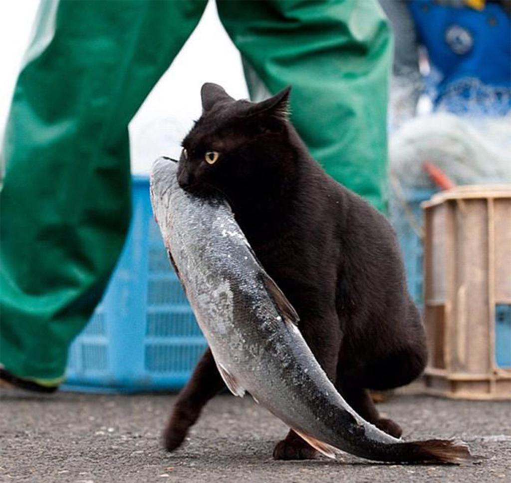 Cat Burglar (35)
