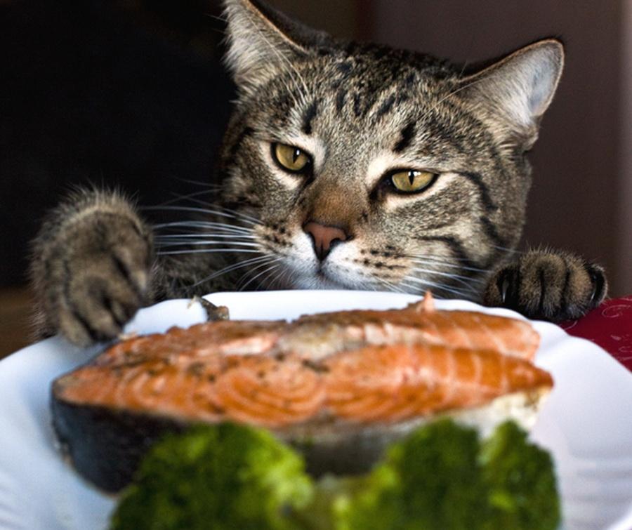 Cat Burglar (38)