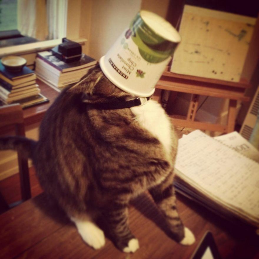 Cat Burglar (4)