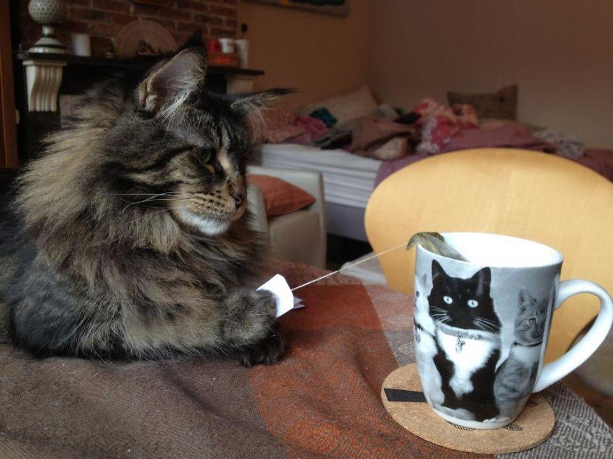 Cat Burglar (5)