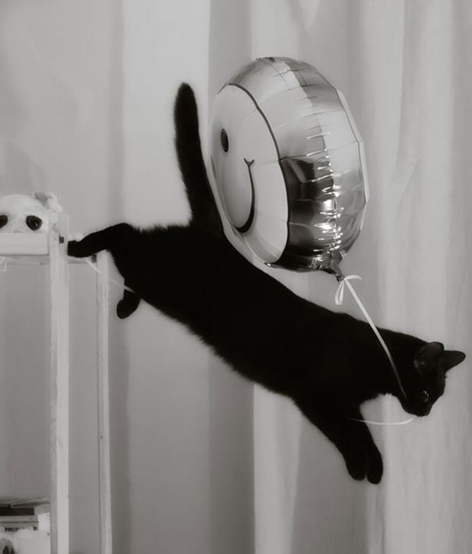 Cat Burglar (50)
