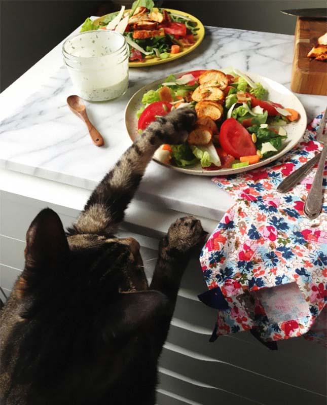 Cat Burglar (51)