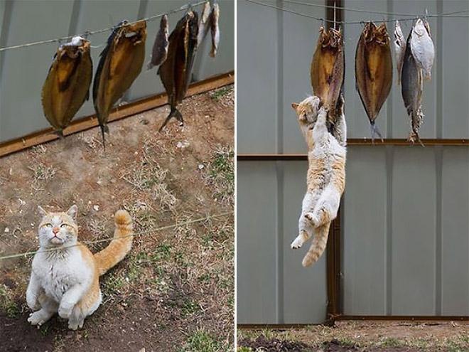 Cat Burglar (54)