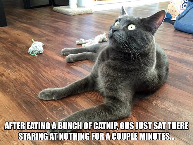Cat On Catnip (10)