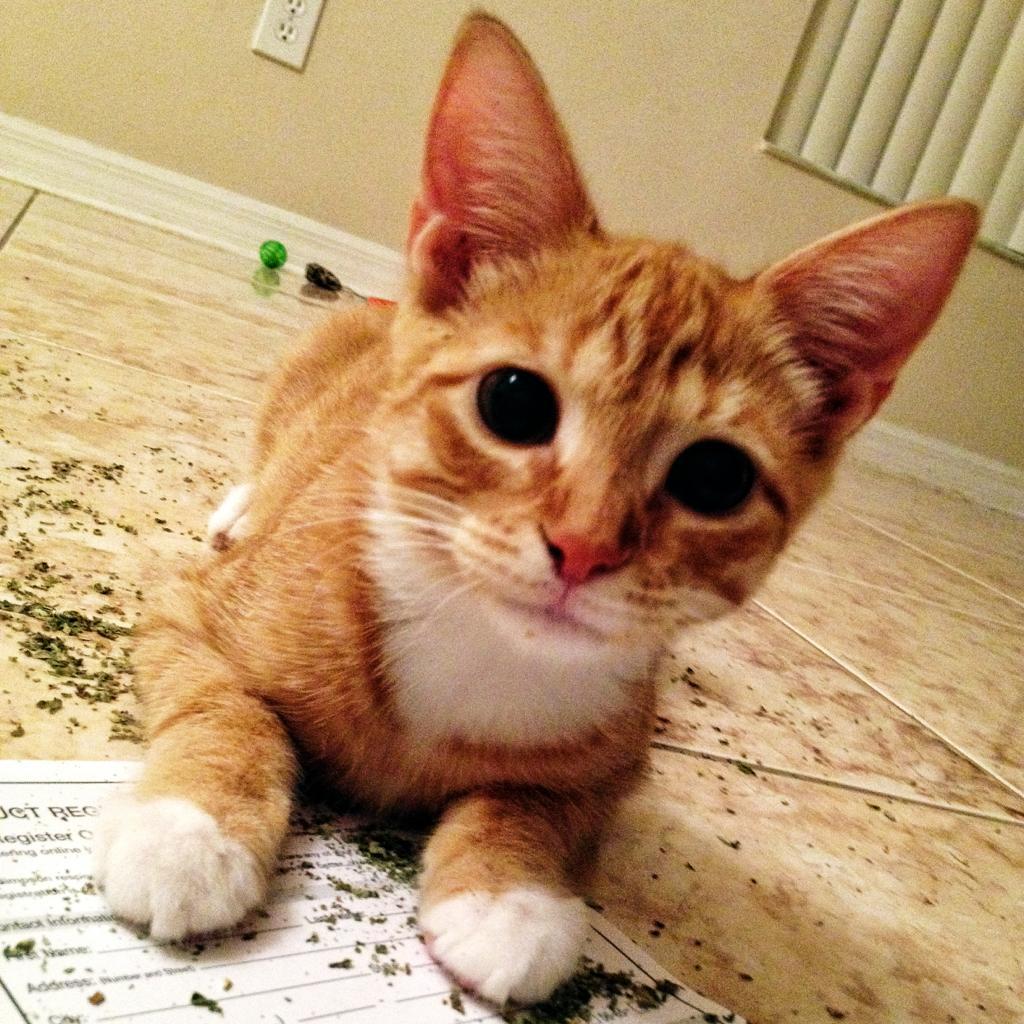 Cat On Catnip (12)