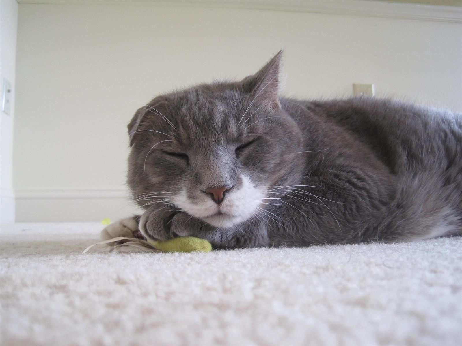 Cat On Catnip (16)