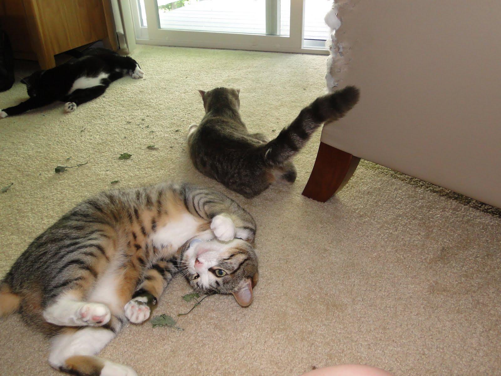 Cat On Catnip (17)