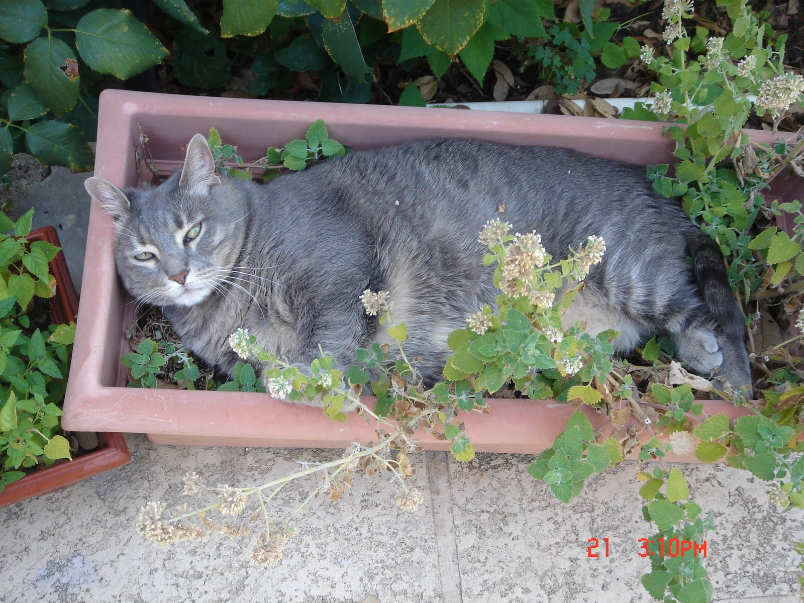 Cat On Catnip (18)