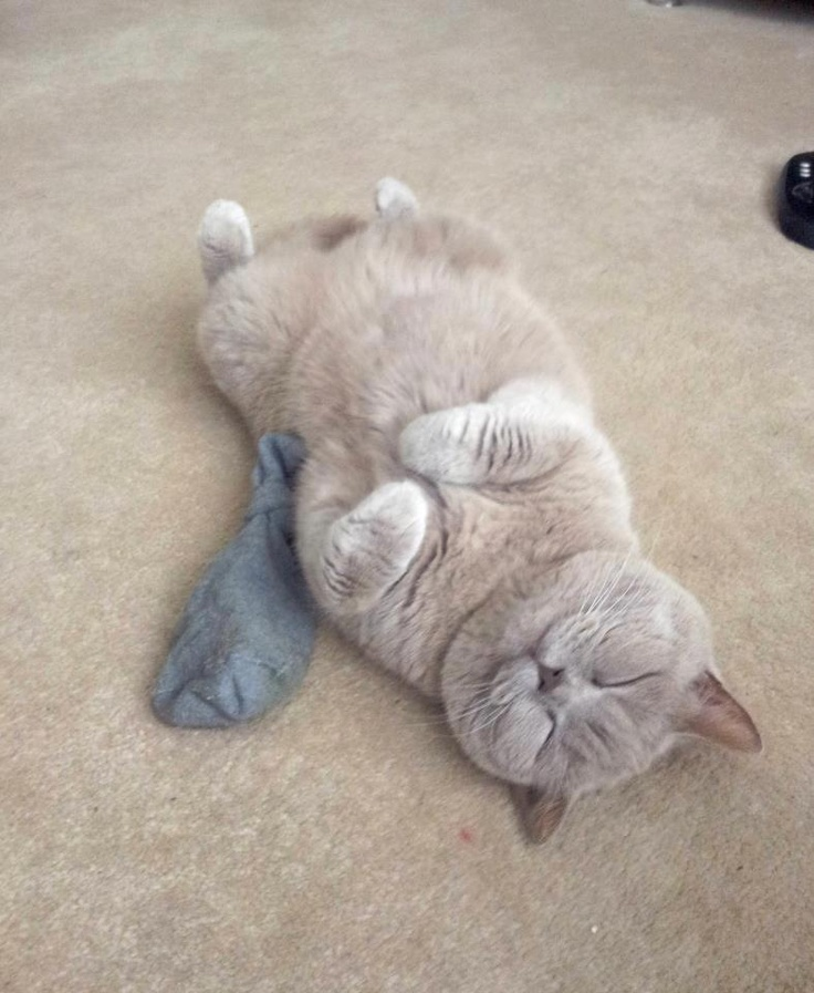 Cat On Catnip (2)