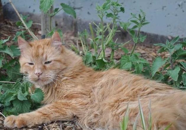 Cat On Catnip (20)