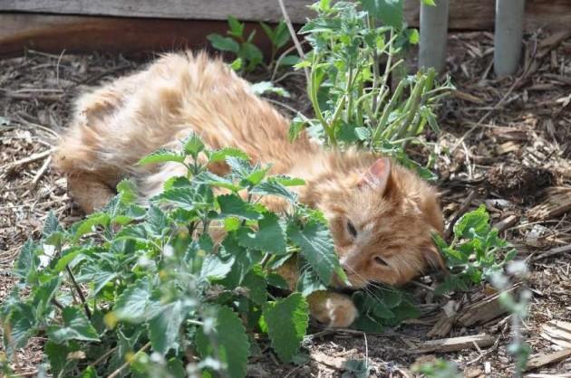 Cat On Catnip (21)