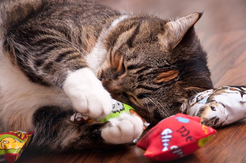Cat On Catnip (23)