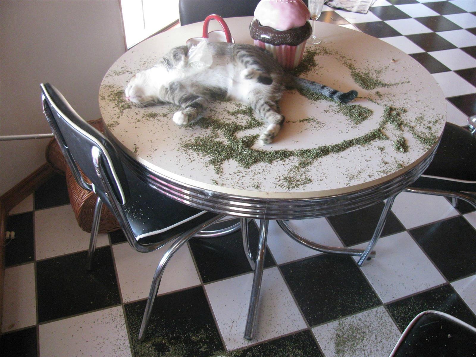 Cat On Catnip (26)