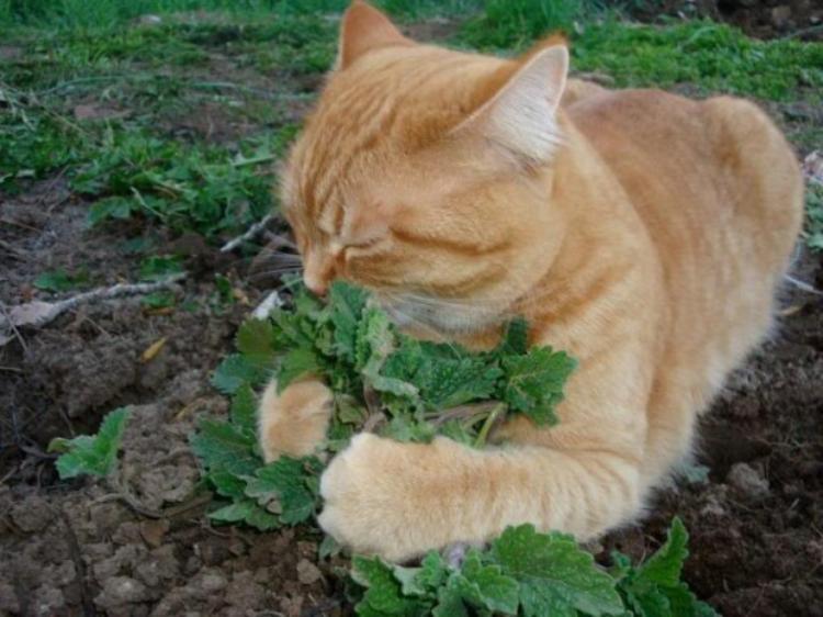 Cat On Catnip (27)