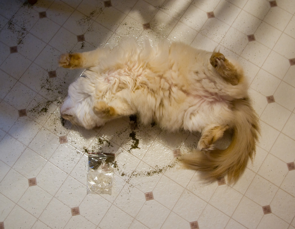 Cat On Catnip (29)