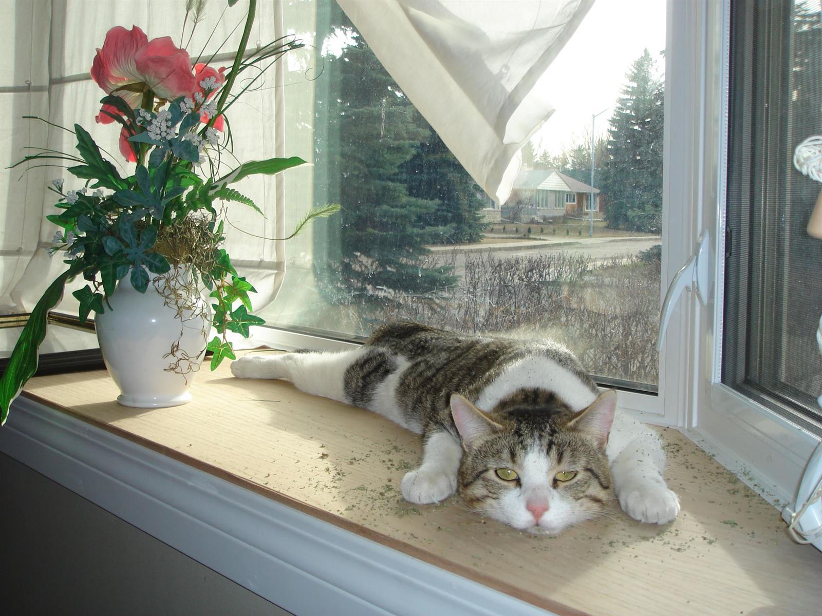 Cat On Catnip (30)