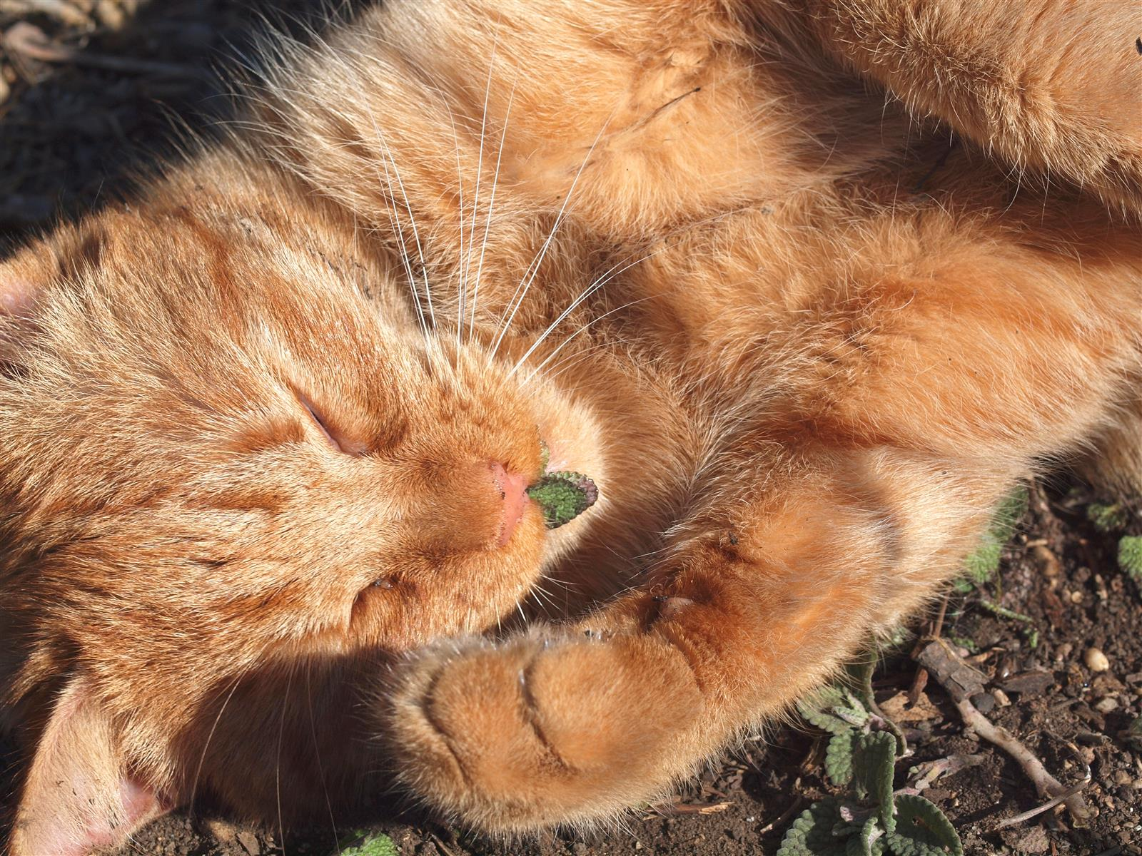 Cat On Catnip (34)