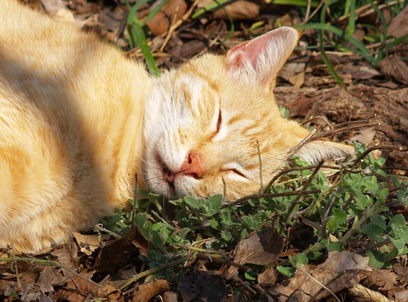 Cat On Catnip (4)