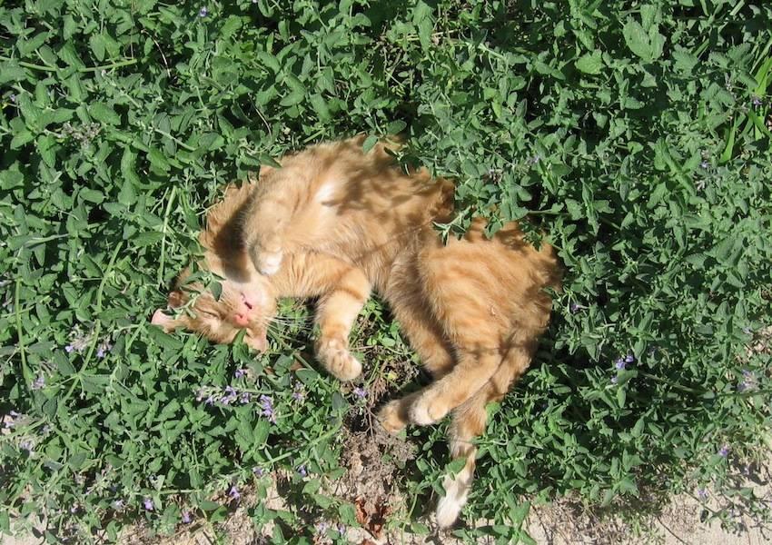 Cat On Catnip (6)