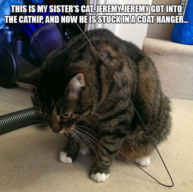 Cat On Catnip (8)
