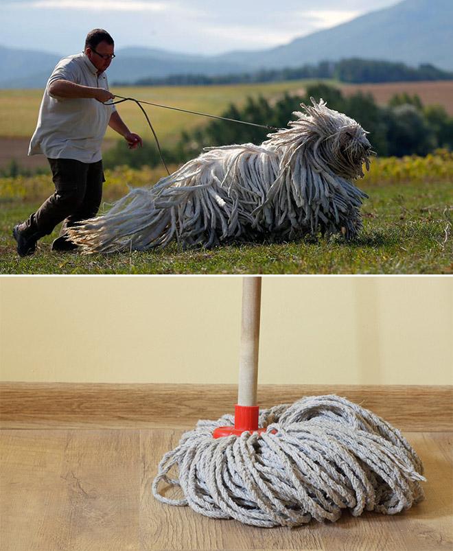 Dog Looks Like A Mop