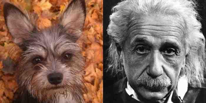 Dog Looks Like Einstein