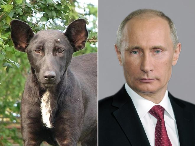 Dog Looks Like Putin