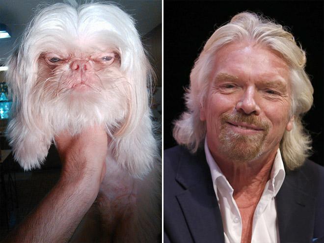 Dog Looks Like Richard Branson