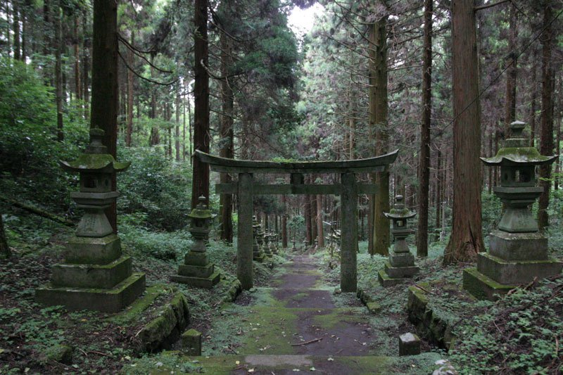 Forest Shrine in Japan (1)