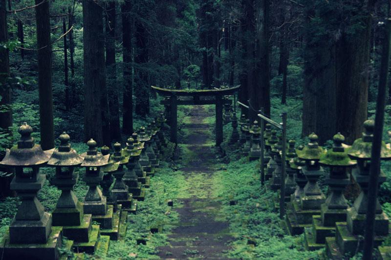 Forest Shrine in Japan (8)